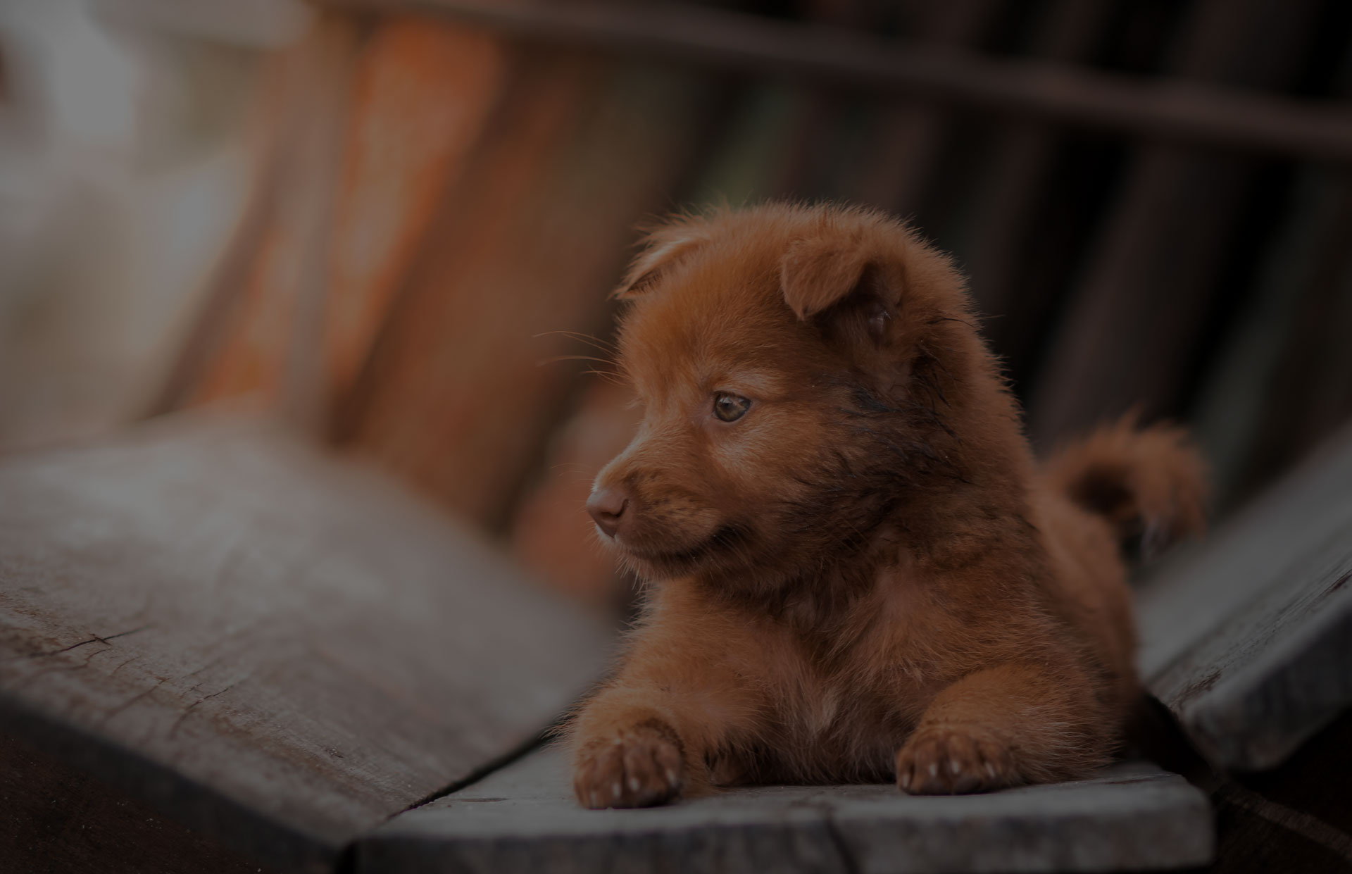lovely brown puppy dog portrait