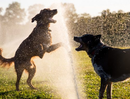 5 Ways Pet Owners Can Beat the Heat