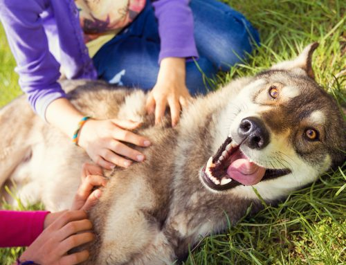 The Key to a Healthy, Happy Pet: Preventive Medicine