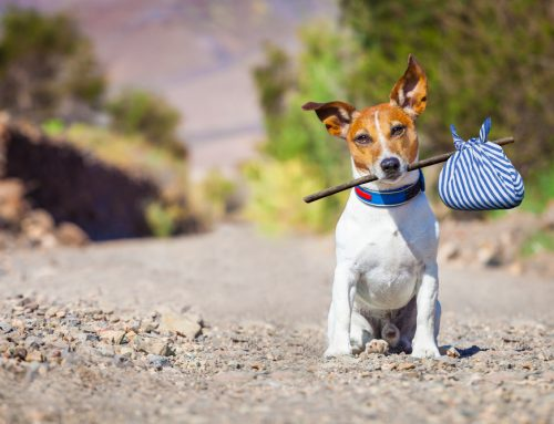 High-Tech Protection Against Heartbreak: The Benefits of Microchipping Pets