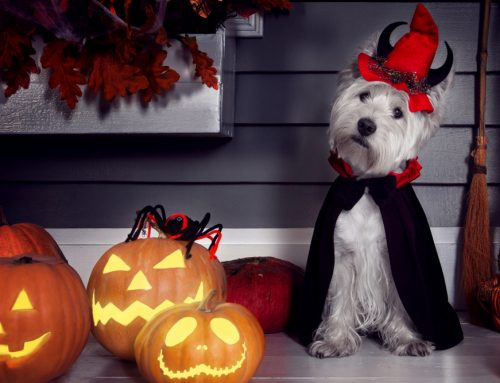 7 Effective Tactics To Keep Your Pet Safe on Halloween