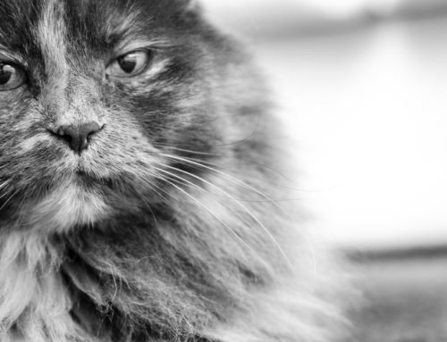 Senior Pet Care Q & A