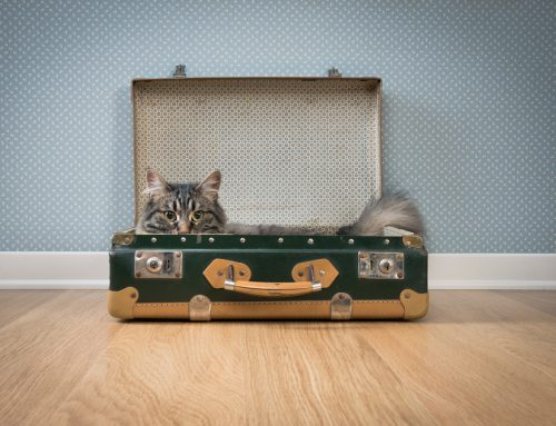 Top 10 Holiday Travel Tips For Pets