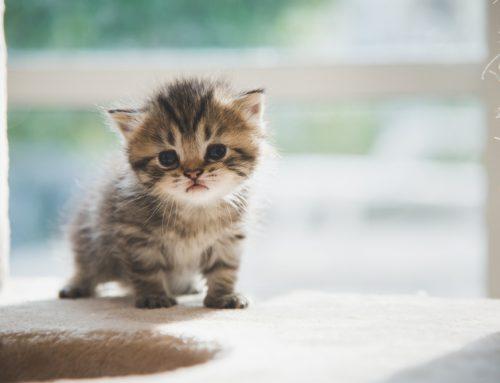 Raising a Happy, Healthy Kitten