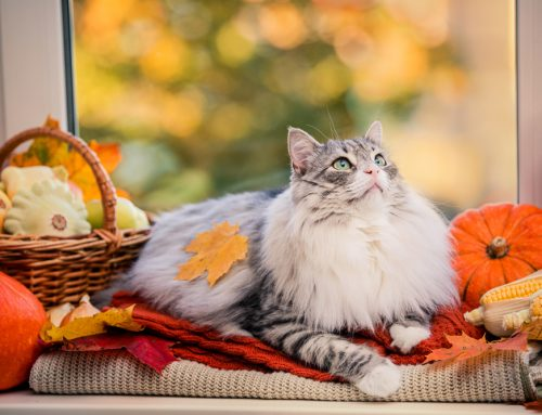 Set Your Pet Up for Halloween Success with a Weight Management Plan