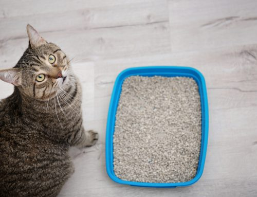 Why is My Cat Peeing Outside the Litter Box?