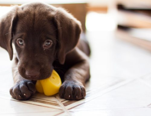 Our Top 5 Secrets to Ensure Your Puppy's Success